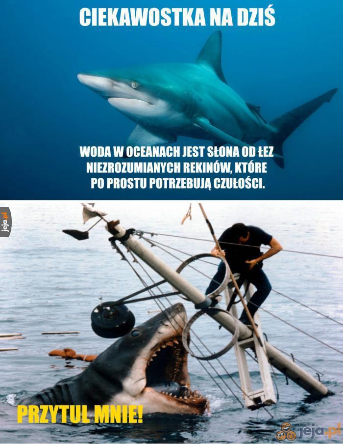 Biedne niezrozumiane rekiny