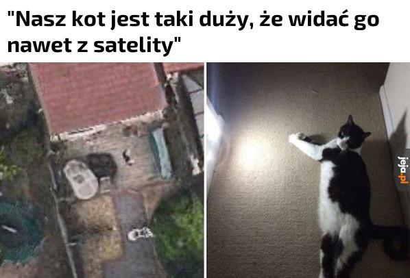 Kawał kota