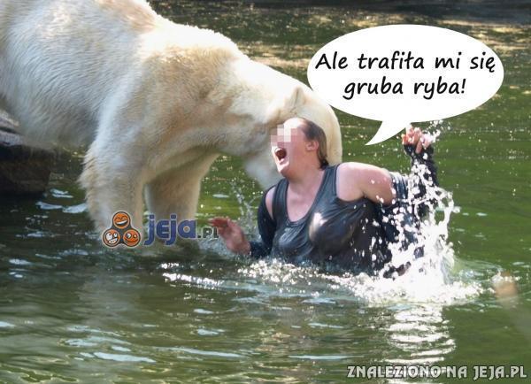Niedźwiedź i jego gruba zdobycz