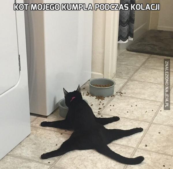 Kot mojego kumpla podczas kolacji