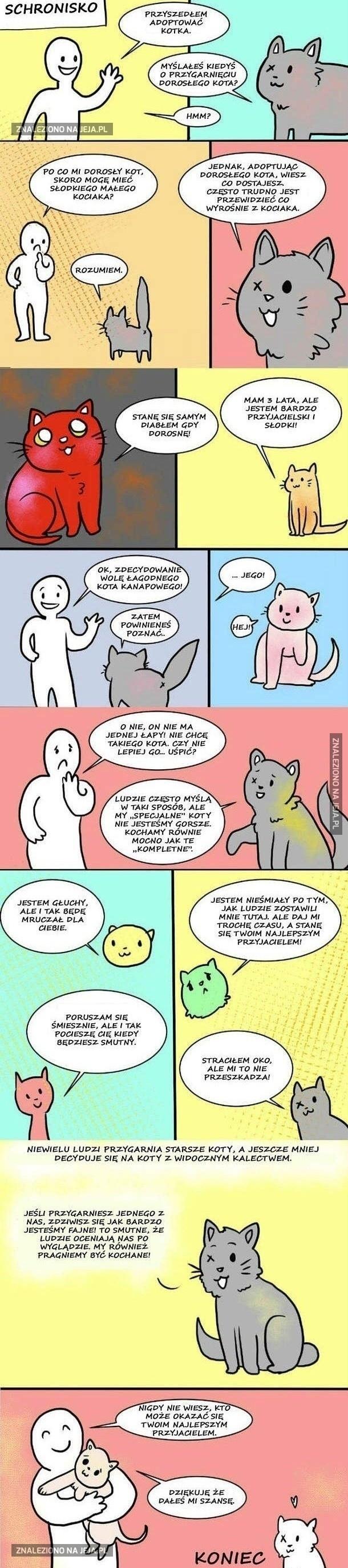 Każdy kot ma uczucia