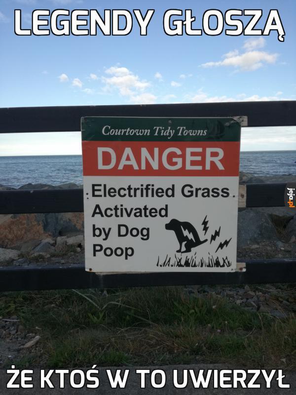 Tymczasem ilość porażonych psów wciąż wynosi zero