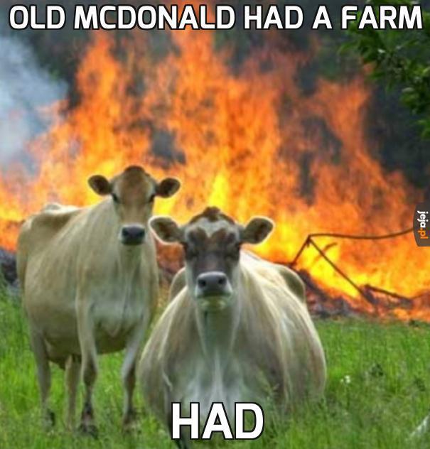Nie zadzieraj z krowami, teraz mają kasę z 500+
