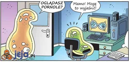 Bakteryjna pornografia