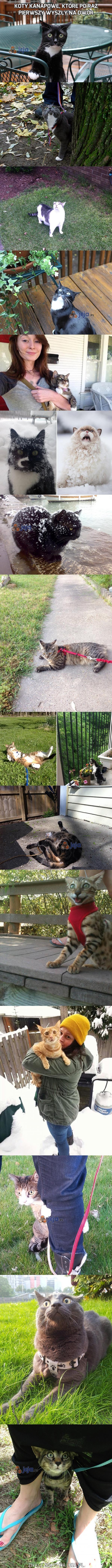 Koty kanapowe, które po raz pierwszy wyszły na dwór