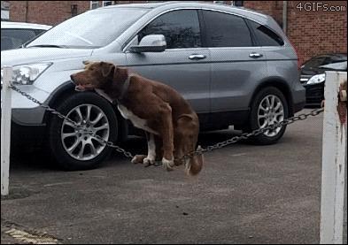 Niezwykły pies