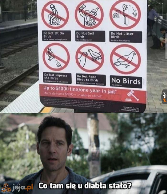 Ptaki musiały naprawdę zajść im za skórę