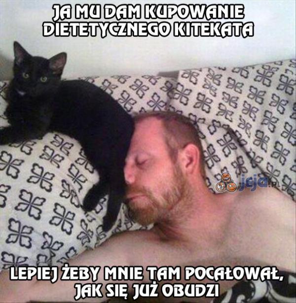 Uważaj na zemstę koteła