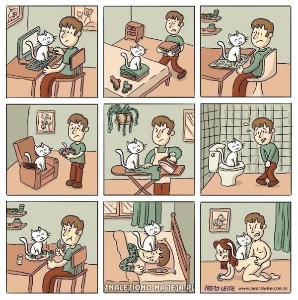 Przeklęte koty