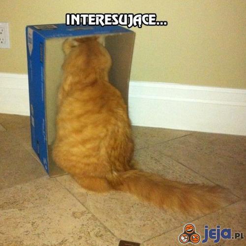 Kot zainteresowany kartonem
