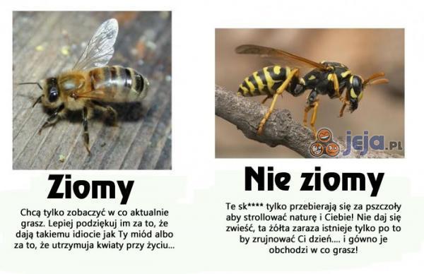 Znaj różnice obywatelu!