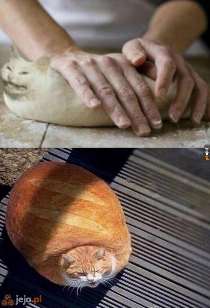 Chlebowe kotki
