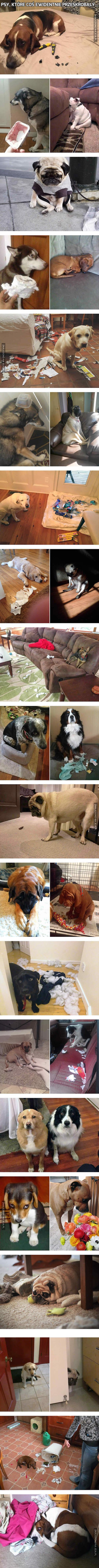 Psy, które coś ewidentnie przeskrobały...