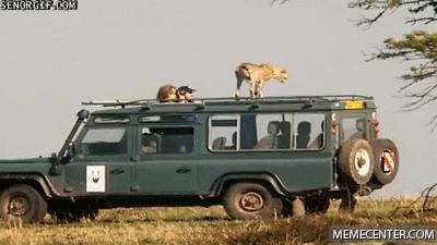 Gó*niane safari