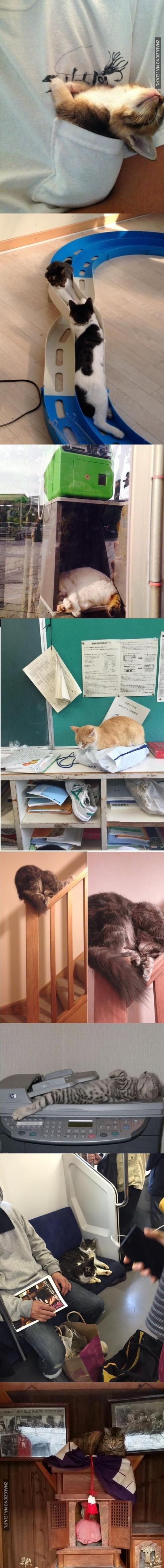 Nie ma miejsca, gdzie kot nie zaśnie #1