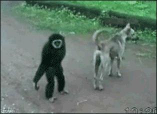 Złośliwa małpa