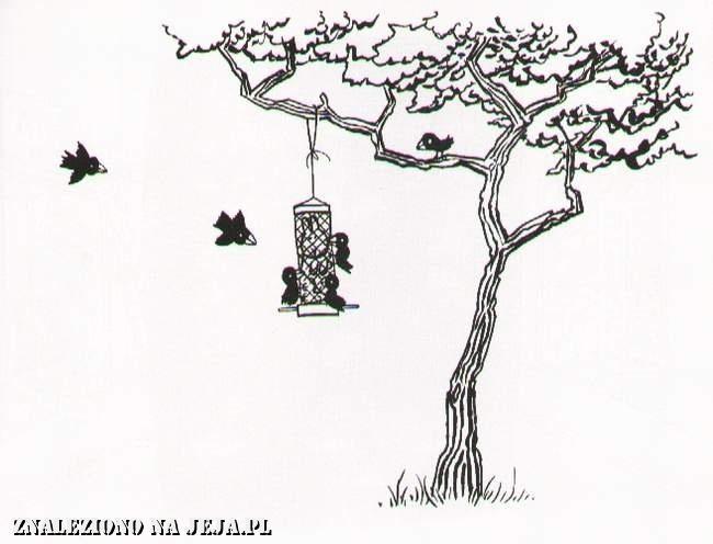 Samobójstwa zajączka: Zajączek w karmniku