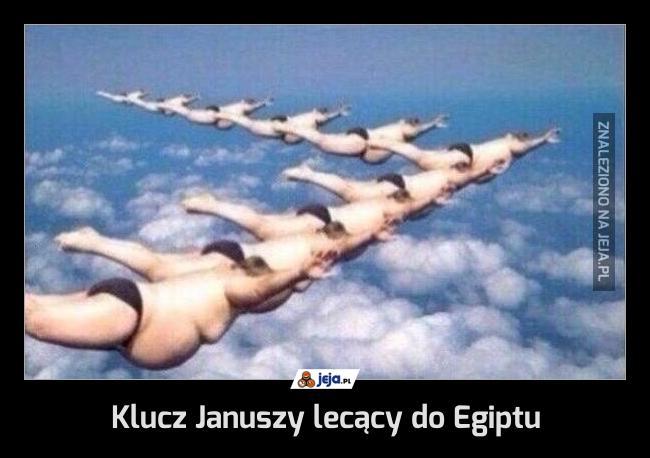 Klucz Januszy lecący do Egiptu