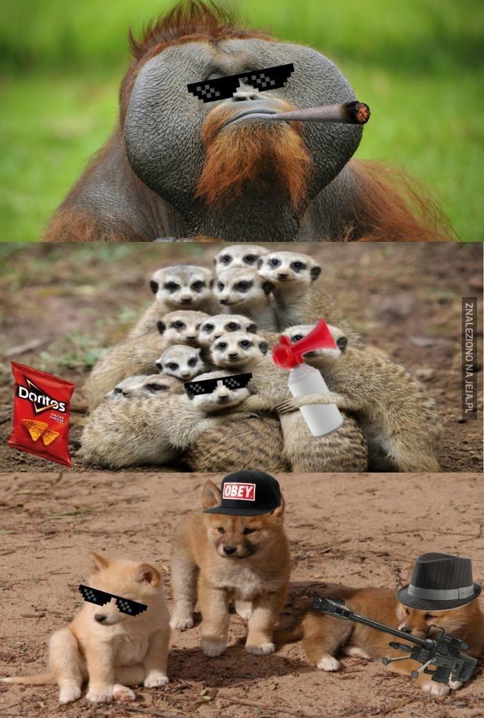 Zwierzęta w wersji MLG