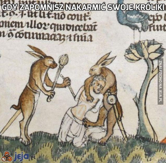 Gdy zapomnisz nakarmić swoje króliki