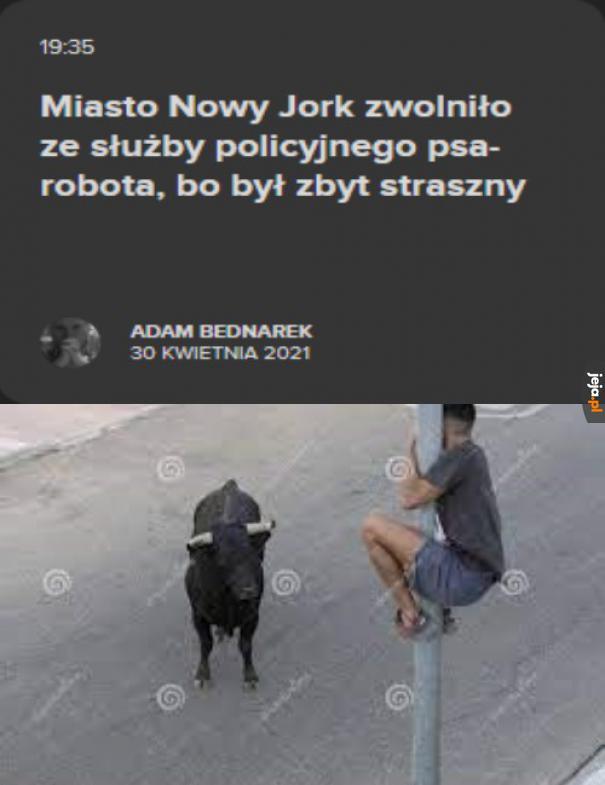 Naprawdę straszny ten pies