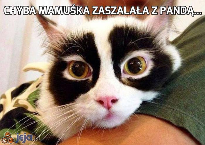 Chyba mamuśka zaszalała z pandą...