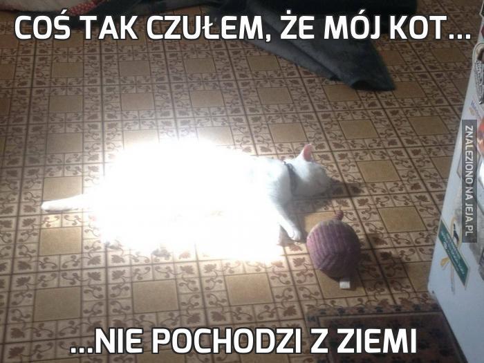 Coś tak czułem, że mój kot...