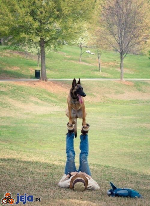 Wyższy poziom tresury psa
