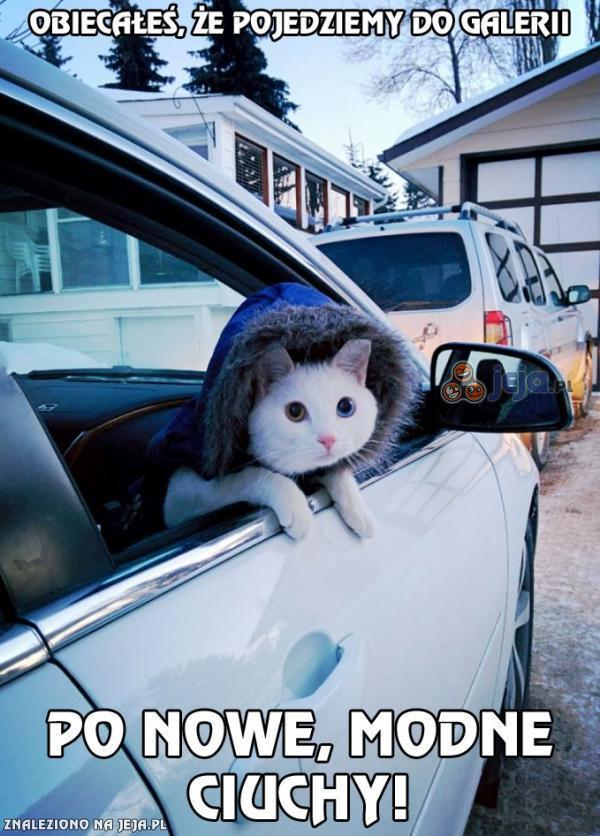 Nie stać mnie na luksusowego kota