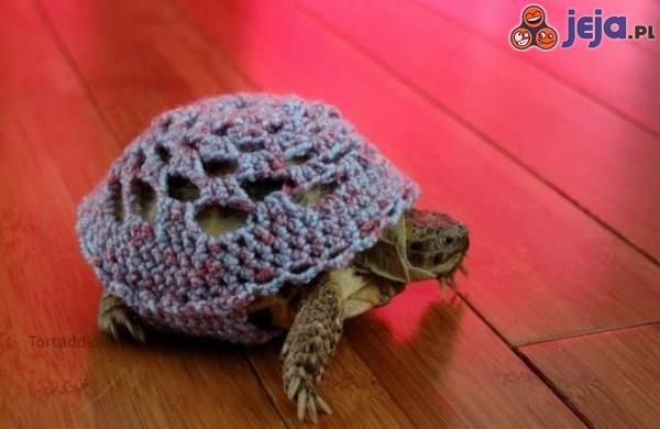Sweterek dla żółwia