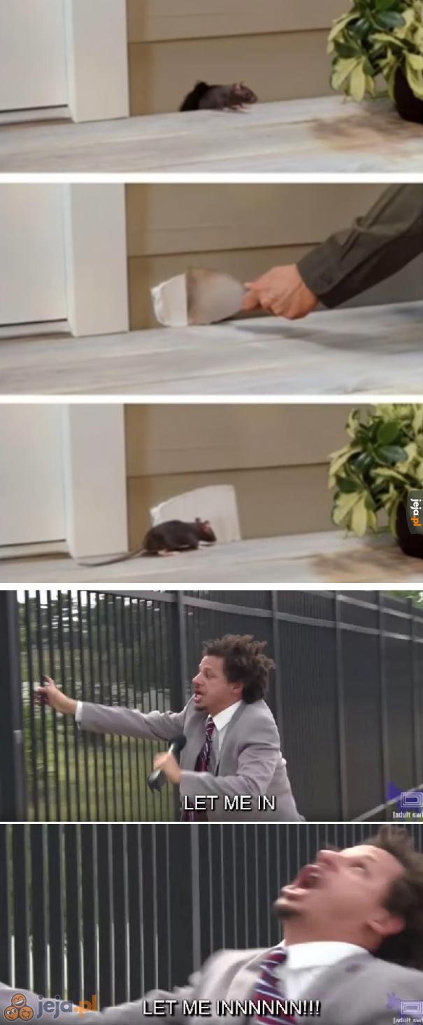 Biedna myszka