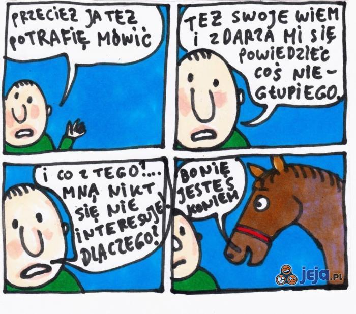 Tylko konie się liczą