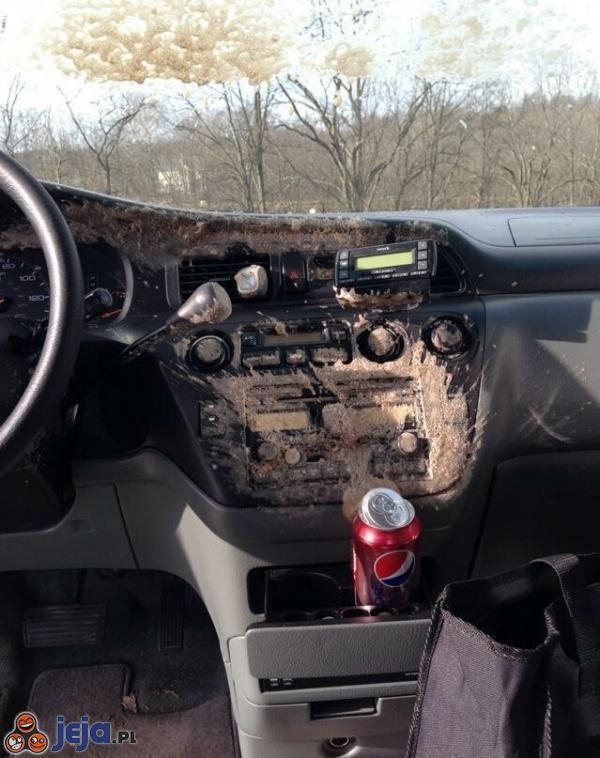 Pepsi w samochodzie