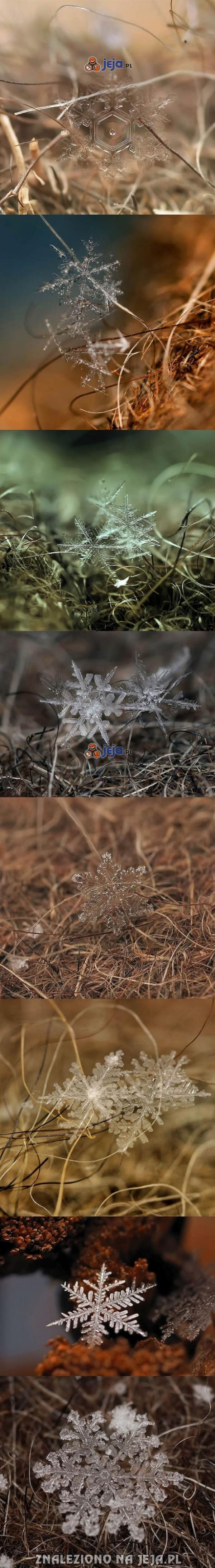 Płatki śniegu uchwycone przed roztopieniem się