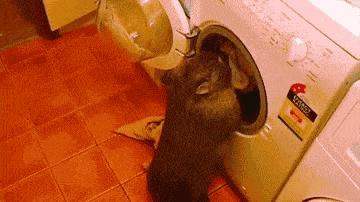 Nie lubisz prać? Kup sobie Wombata