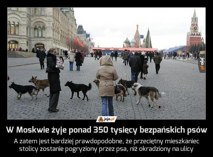 W Moskwie żyje ponad 350 tysięcy bezpańskich psów