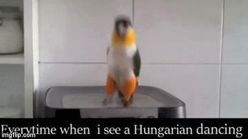 Za każdym razem, gdy widzę tańczącego Węgra