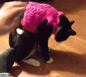 Sweterek popsuł mi kota
