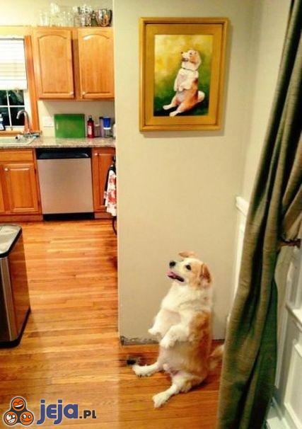 Pies i obraz - niepokojący widok