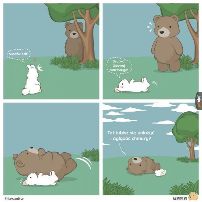 Królik i niedźwiedź