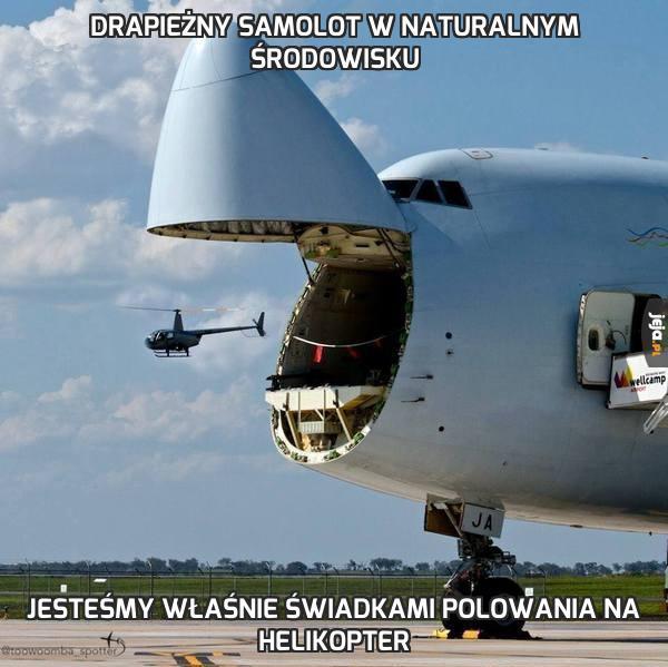 Drapieżny samolot w naturalnym środowisku