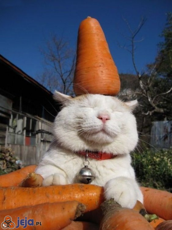 Szczęśliwy kotek