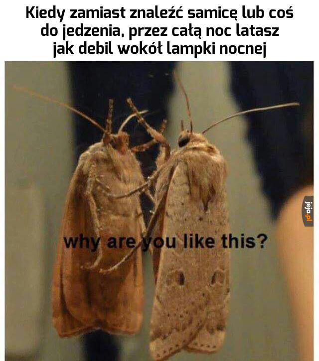 Czemu taki jesteś?