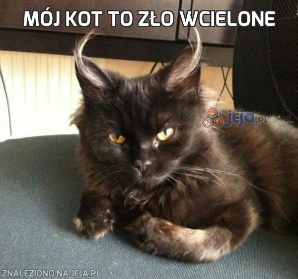 Mój kot to zło wcielone