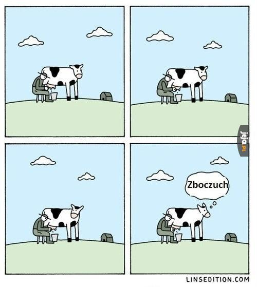Przemyślenia krowy