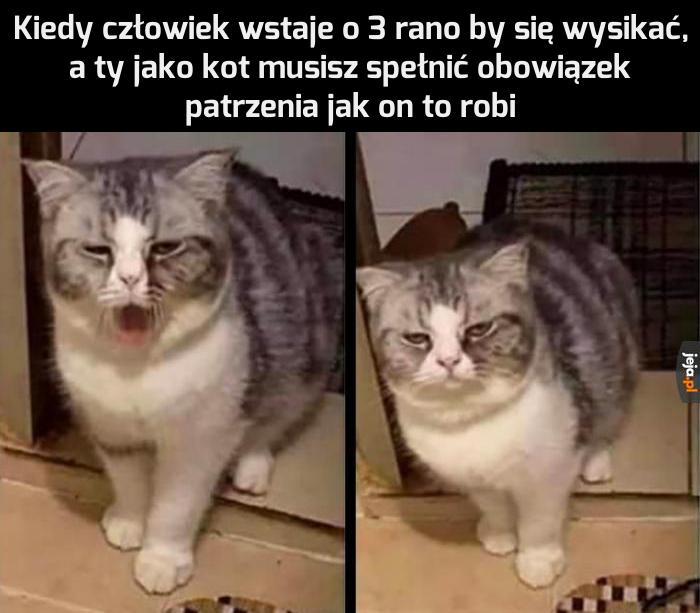 Kot też ma swoje obowiązki