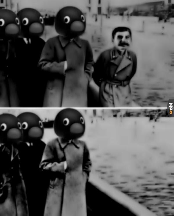 Pingwiny to mistrzowie propagandy i cenzury
