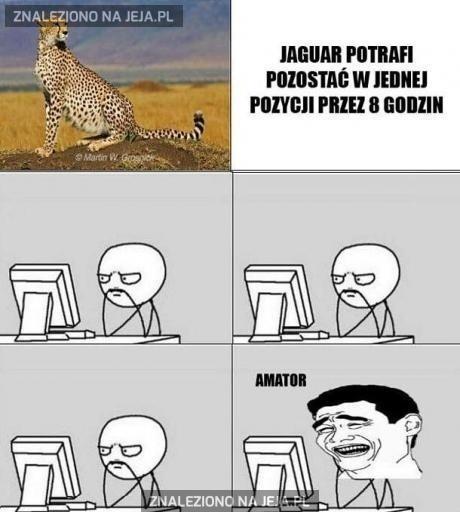 Jaguar amator