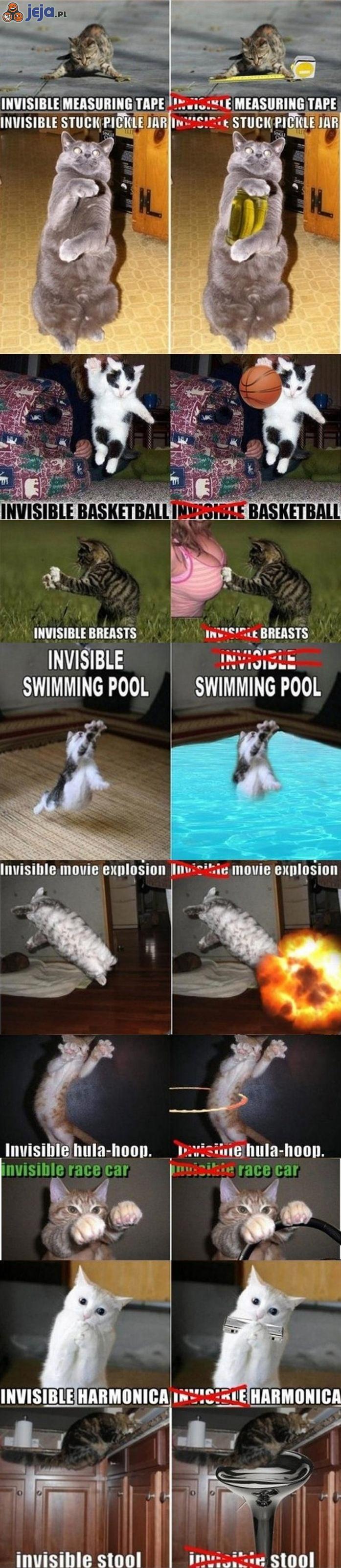 Koty i niewidzialne przedmioty
