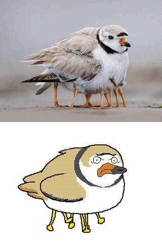 Ptaszek prosto z Czarnobyla